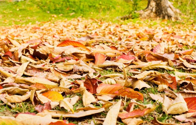 De bladeren van de herfst gevallen op weide stock afbeelding
