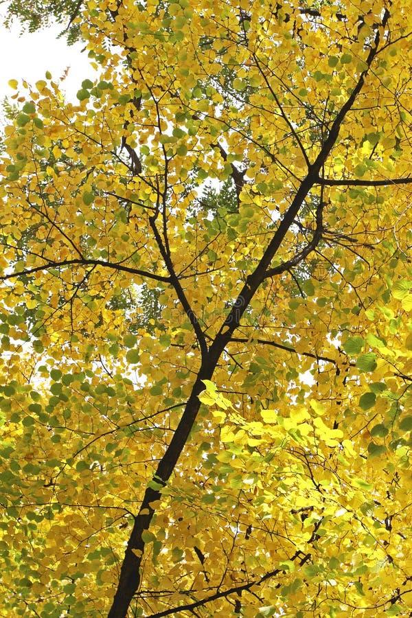 De bladeren van de herfst in Hofgarten, Dusseldorf royalty-vrije stock foto's