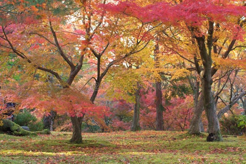 De bladeren van de herfst in Kyoto royalty-vrije stock foto's