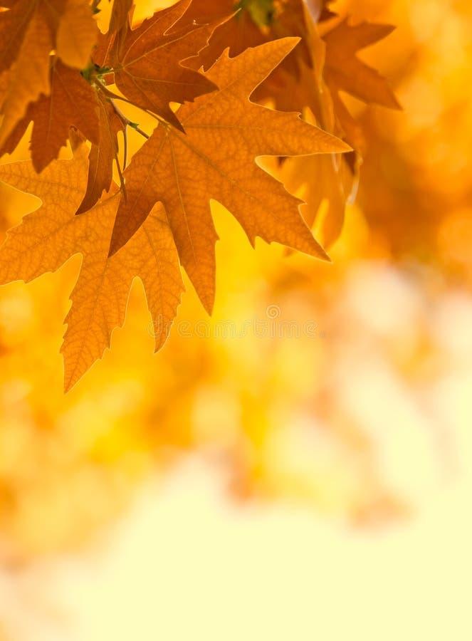 De bladeren van de herfst, ondiepe nadruk royalty-vrije stock afbeeldingen