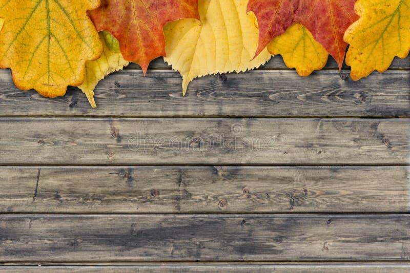 De bladeren van de herfst op de landelijke houten planken royalty-vrije stock afbeeldingen