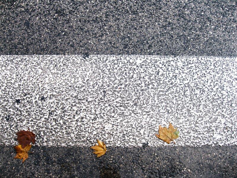 De bladeren van de herfst op de weg stock afbeeldingen