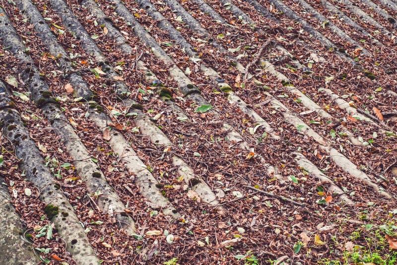 De bladeren van de herfst op een dak stock afbeeldingen