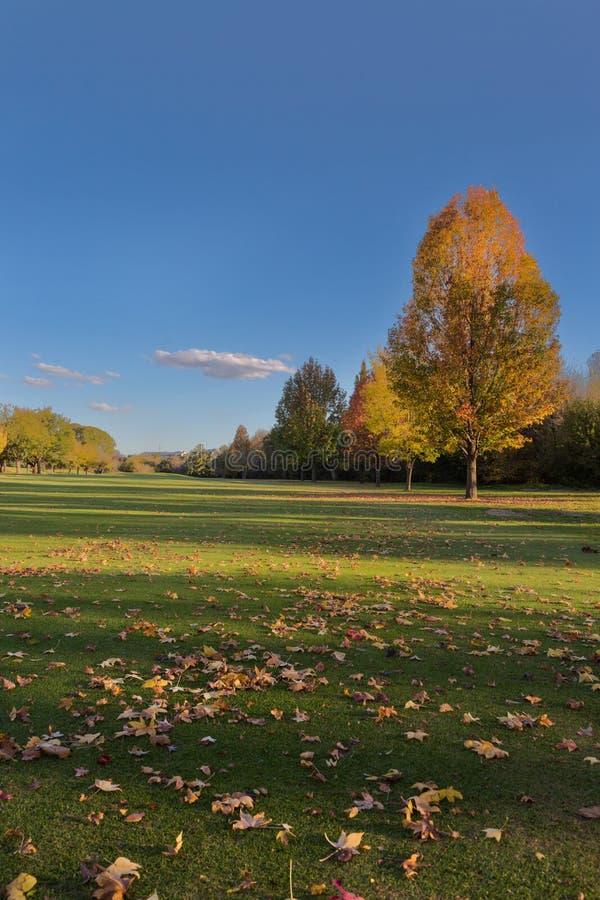 De bladeren van de herfst op het gras royalty-vrije stock afbeeldingen
