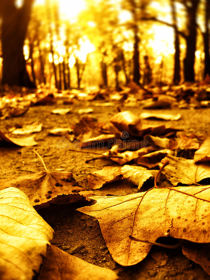 De bladeren van de herfst in parkweg