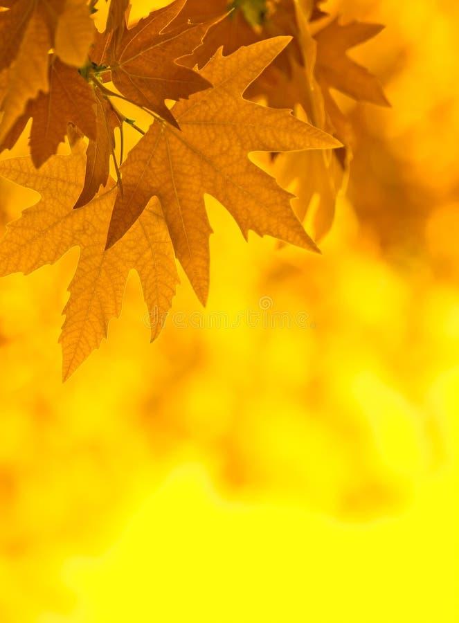 De bladeren van de herfst, zeer ondiepe nadruk royalty-vrije illustratie