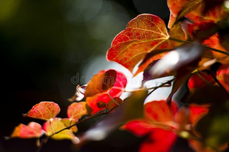 De bladeren van de herfst in zonlicht stock foto