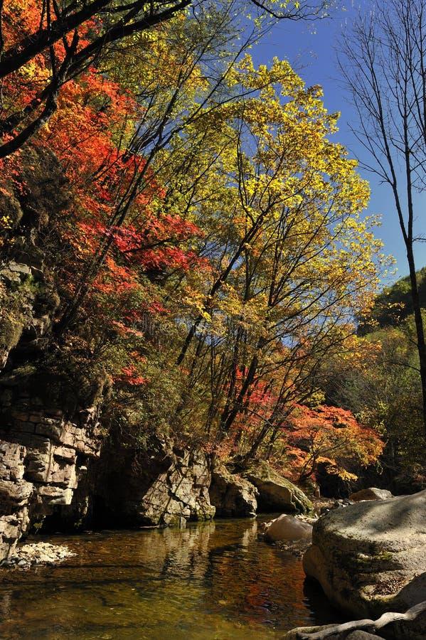 De bladeren van de herfstesdoorn royalty-vrije stock foto's