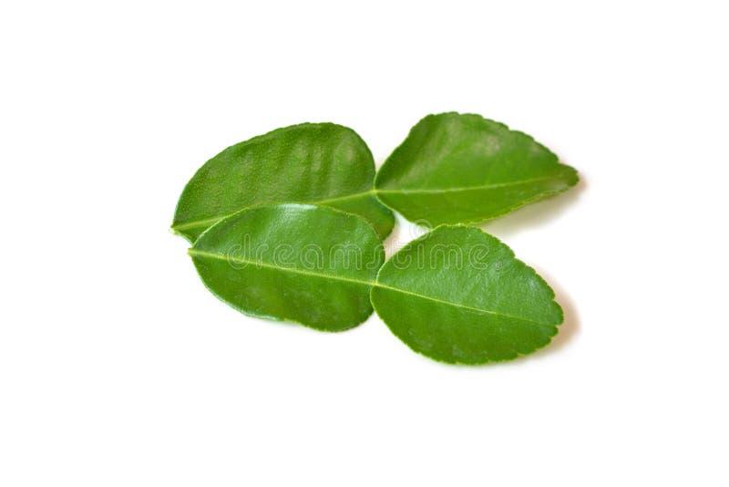 De bladeren van de Kaffirkalk op witte achtergrond royalty-vrije stock foto's