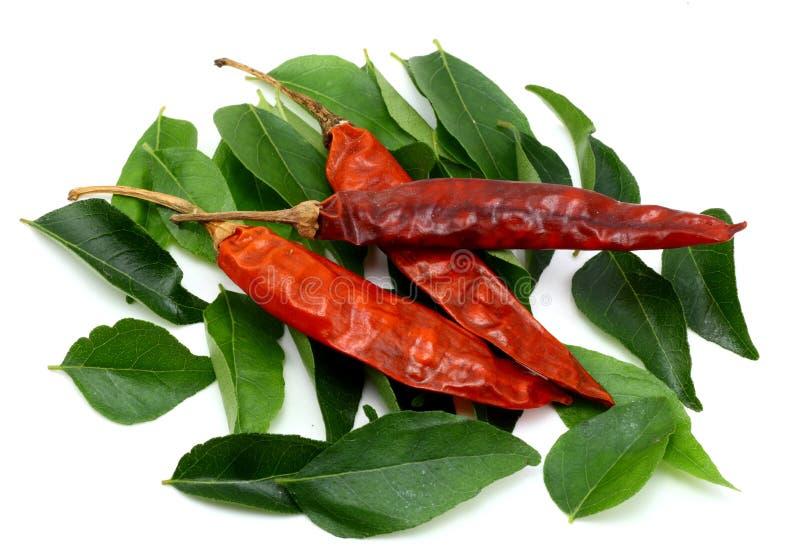 De bladeren van de kerrie en droge rode Spaanse pepers stock foto's