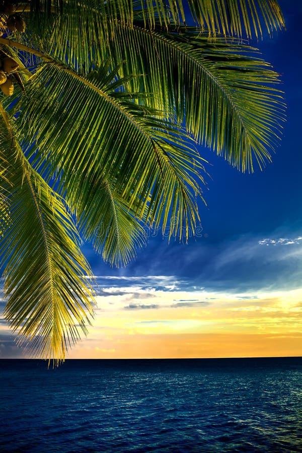 De bladeren van de kokosnotenpalm over eindeloze oceaan stock afbeelding