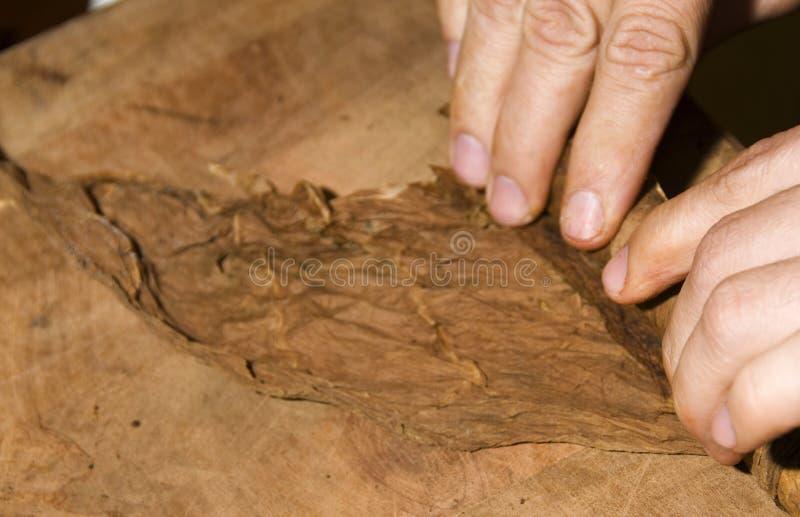 De bladeren van de tabak die in sigaar Nicaragua worden gerold royalty-vrije stock afbeelding