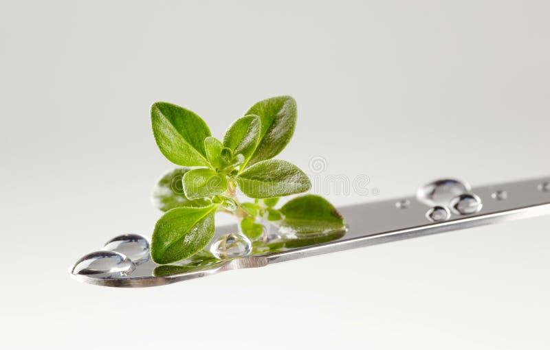 De bladeren van de thyme op een mes stock foto