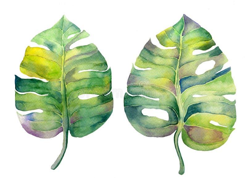 De bladeren van de waterverfvochtigheid op wit worden geïsoleerd dat vector illustratie