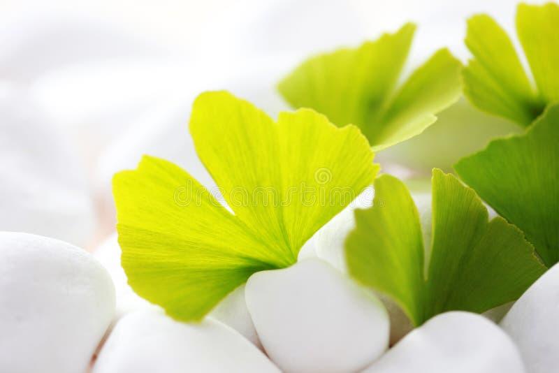 De bladeren van Ginko royalty-vrije stock fotografie