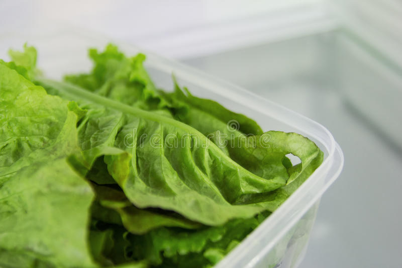 De bladeren van groene salade in de plastic container op een plank van een koelkast royalty-vrije stock foto's