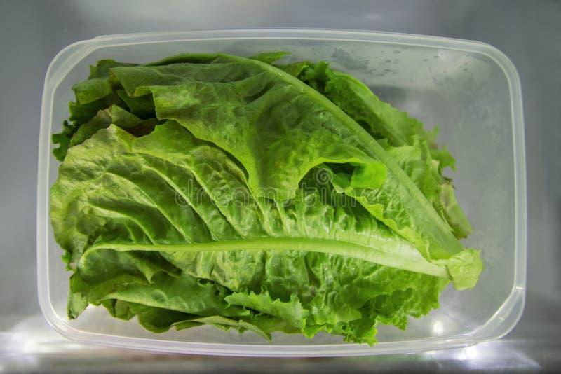 De bladeren van groene salade in de plastic container op een plank van een koelkast royalty-vrije stock fotografie