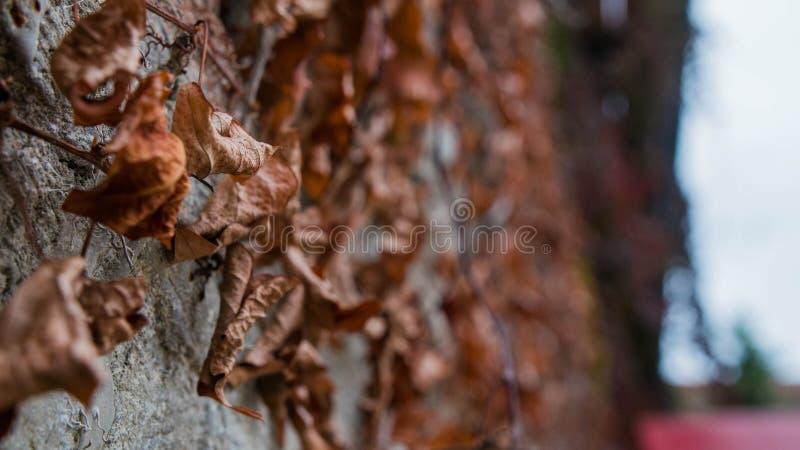 De bladeren van de herfst bepalen het spel van kleuren stock foto