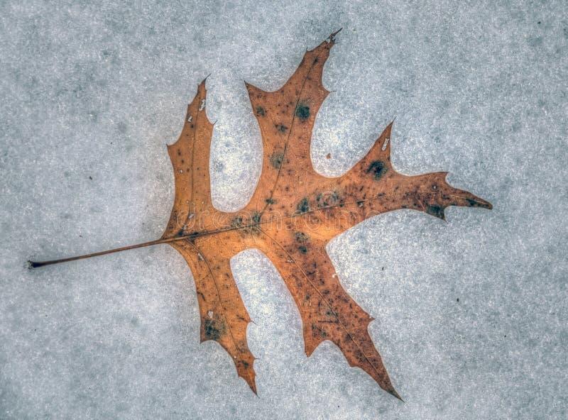 De bladeren van de herfst in bos royalty-vrije stock afbeelding