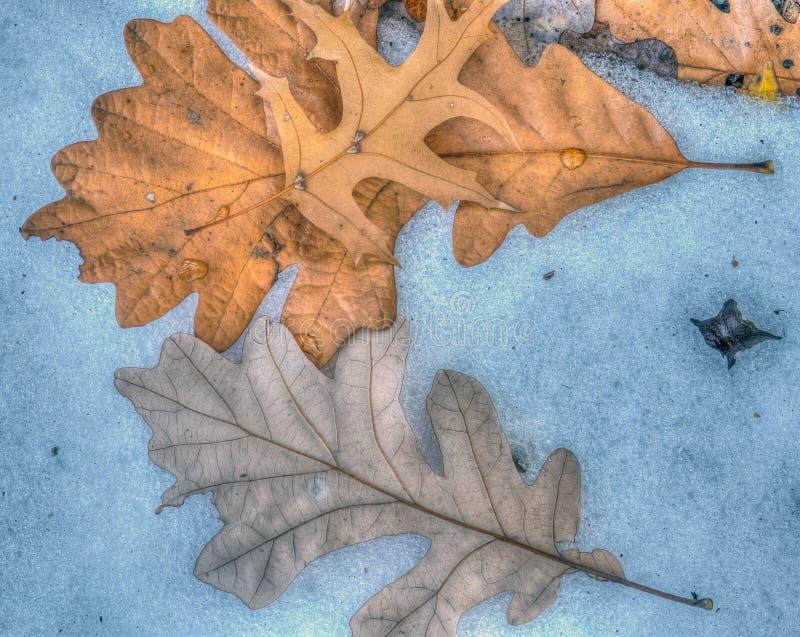 De bladeren van de herfst in bos royalty-vrije stock foto