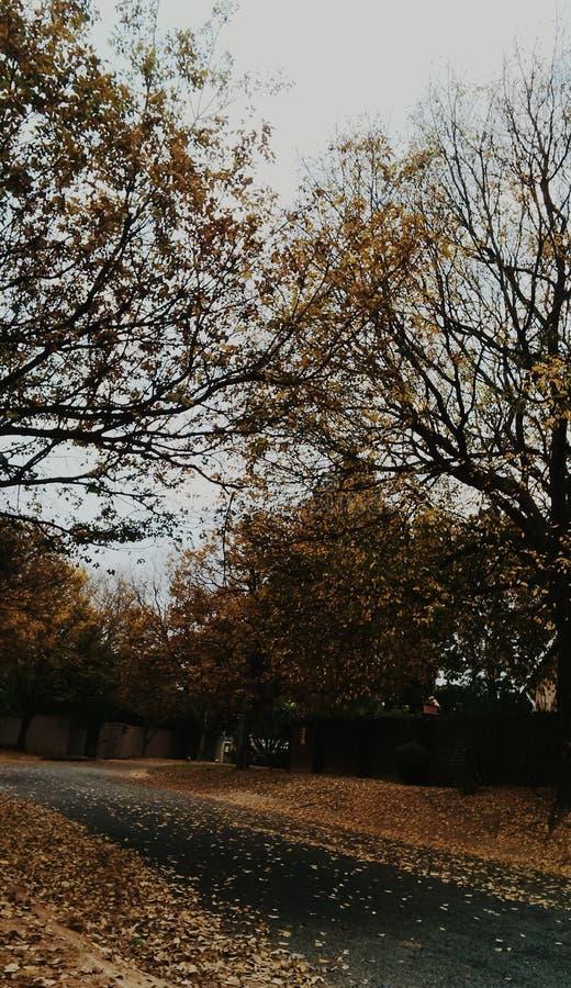 De bladeren van de herfst op de weg stock foto's