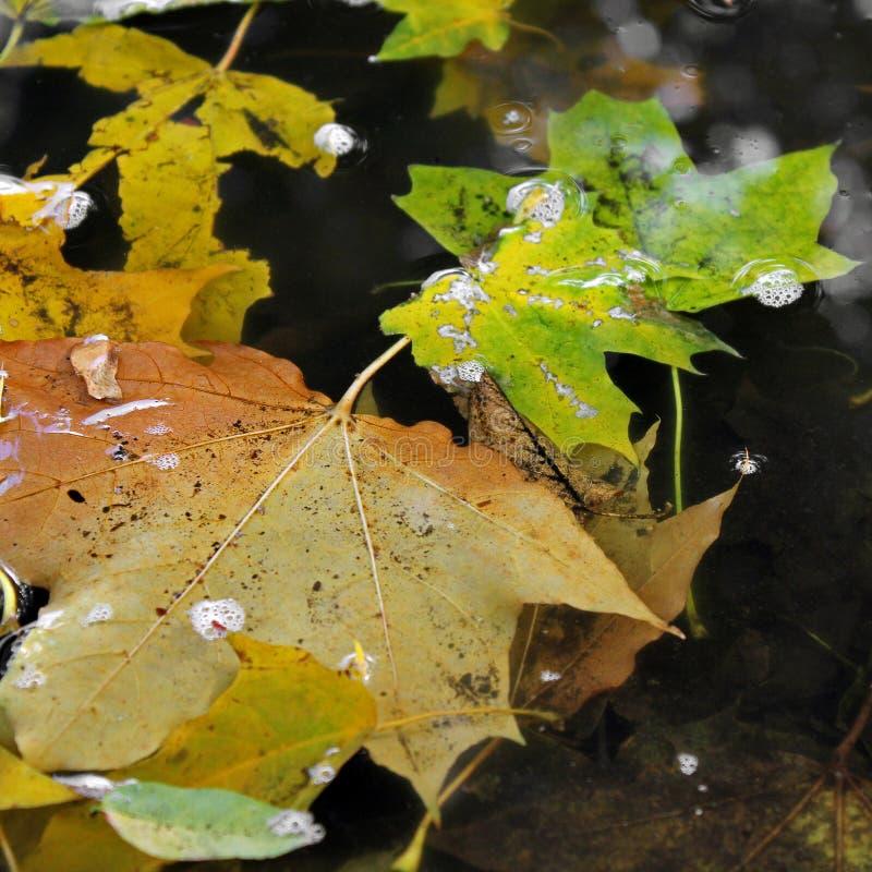 De bladeren van de herfst in water stock foto's