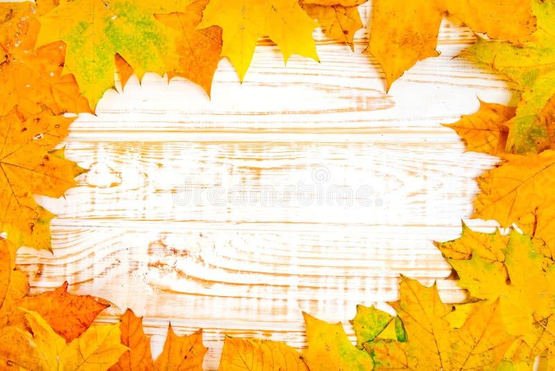 De bladeren van de de herfstesdoorn over houten witte achtergrond met exemplaarruimte royalty-vrije stock afbeeldingen