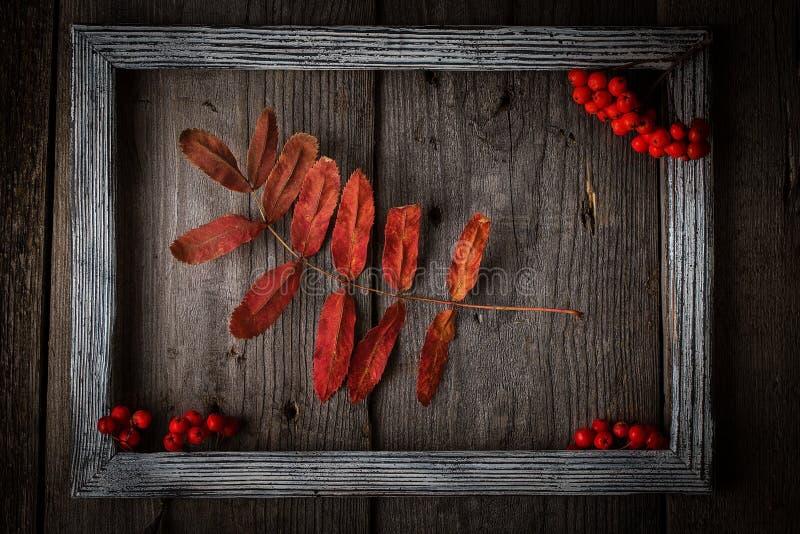 De bladeren van de de herfstlijsterbes op houten textuur in kader stock fotografie