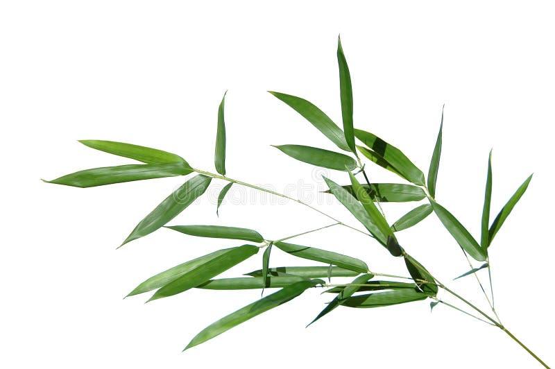 De bladeren van het bamboe stock foto