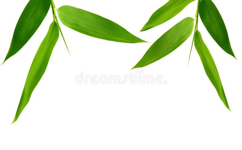 De Bladeren van het bamboe stock afbeeldingen