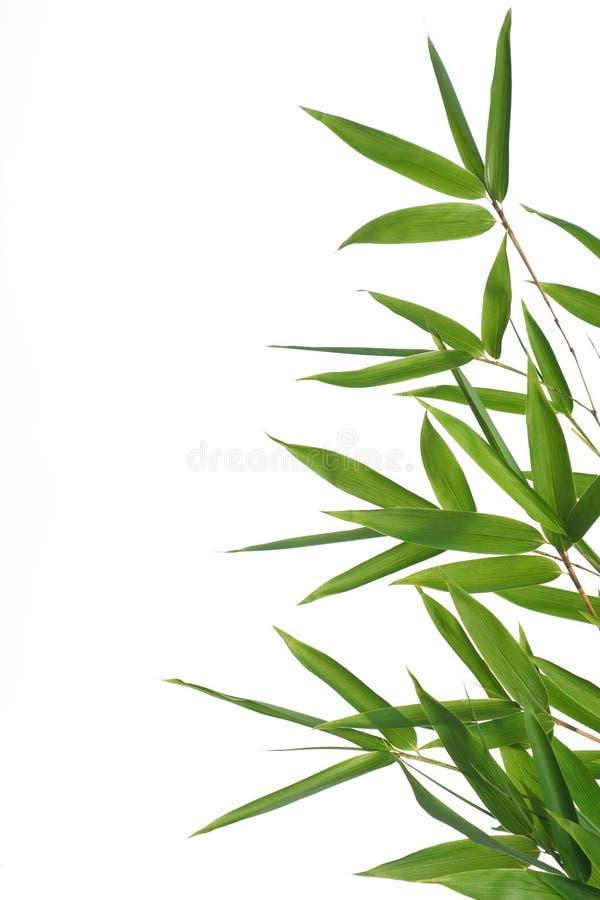 De bladeren van het bamboe royalty-vrije stock foto