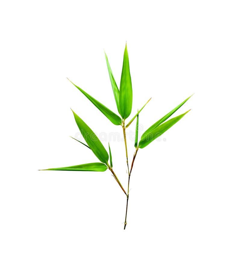 De bladeren van het bamboe die op wit worden geïsoleerdv stock afbeeldingen
