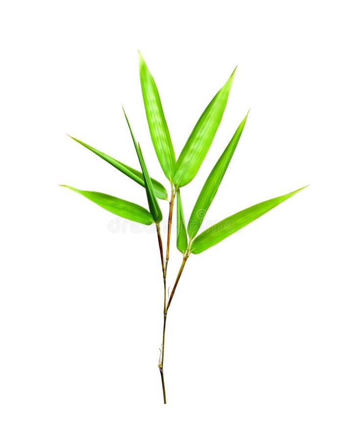 De bladeren van het bamboe die op wit worden geïsoleerdv royalty-vrije stock foto
