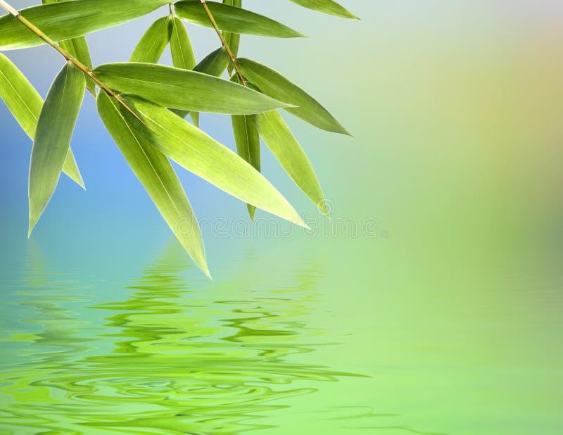De bladeren van het bamboe over abstracte achtergrond stock afbeelding
