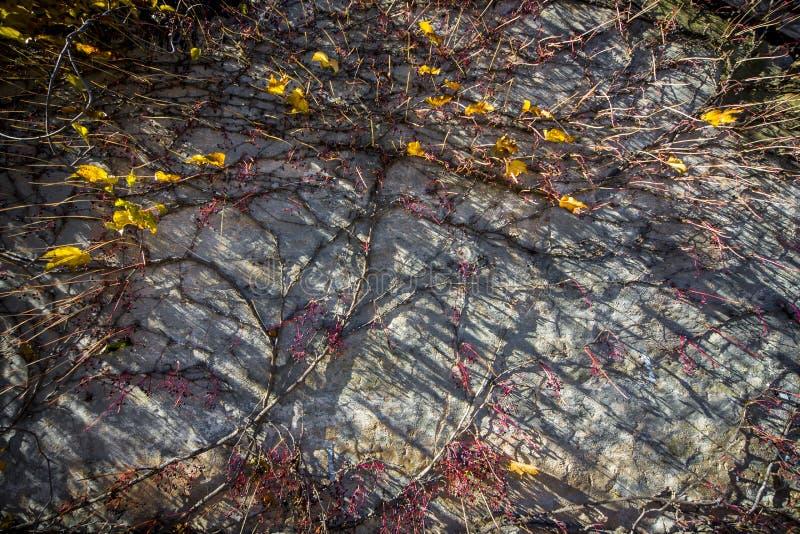 De bladeren van het dalingsgebladerte op muur met ultra brede hoek stock fotografie