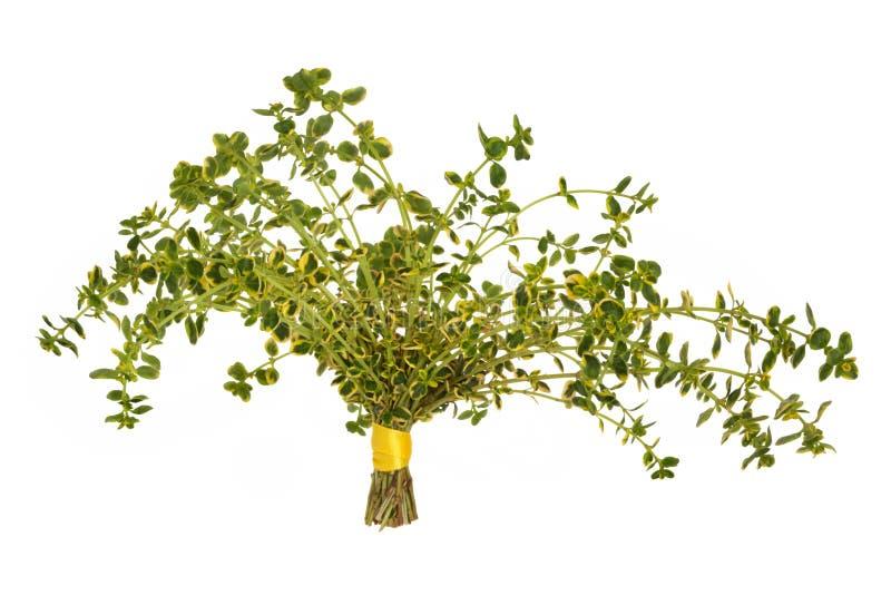 De Bladeren van het Kruid van de thyme royalty-vrije stock foto's
