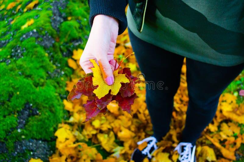 De bladeren van de vrouwenholding, de herfst royalty-vrije stock afbeeldingen