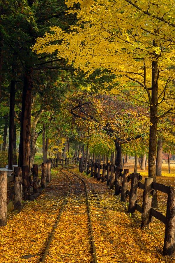 De bladeren veranderen kleur tijdens de herfst Nami Island royalty-vrije stock afbeeldingen