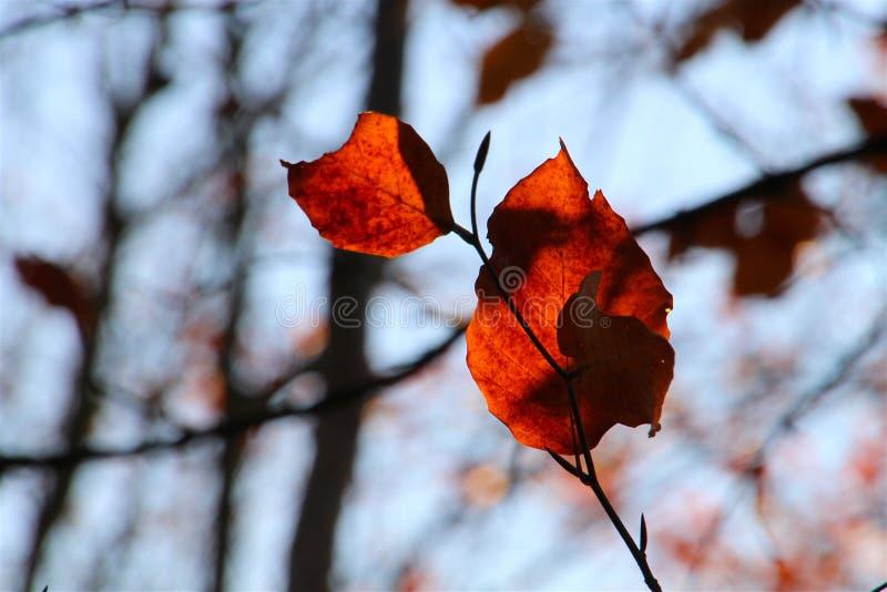 De bladeren wachten op de wind stock foto's