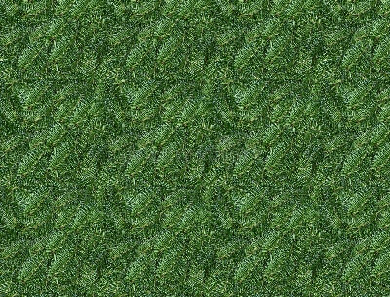 De bladerenachtergrond van de pijnboom De natuurlijke pijnboom tipt achtergrond royalty-vrije stock afbeeldingen