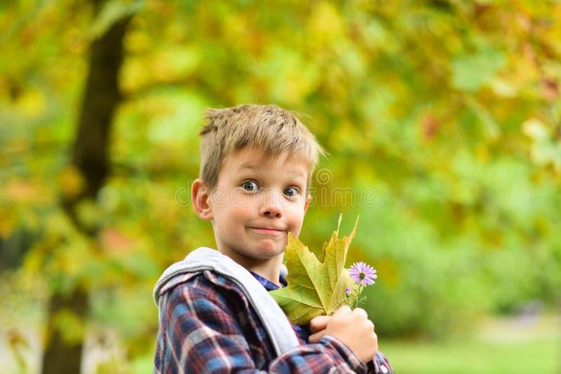 De bladerendaling in de herfst Weinig herfstbladeren van de jongensgreep Weinig jongen geniet van speel op de herfstlandschap De  stock fotografie