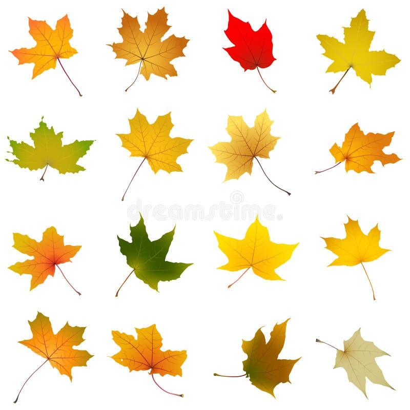 De bladereninzameling van de esdoornherfst stock illustratie