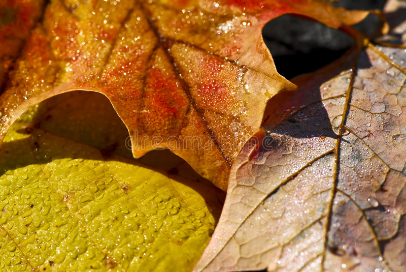 De bladerenmacro van de herfst royalty-vrije stock foto