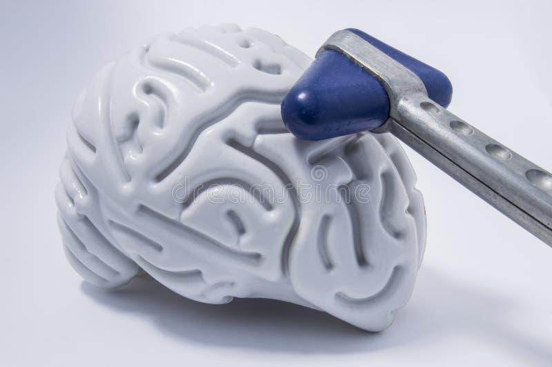 De blauw leiden chroom neurologische hamer liggend op een plastic cijfer van menselijke hersenen met verschillende windingen Het  stock foto