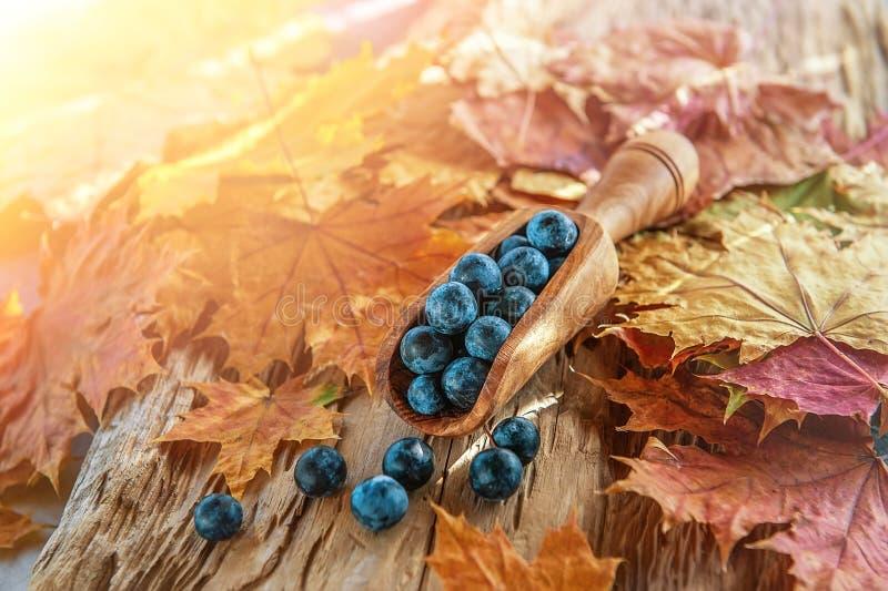 De blauwe bessen van de de herfstoogst van de sleedoorn in een houten lepel uit de olijfboom De achtergrond van de herfst Rode en stock afbeelding