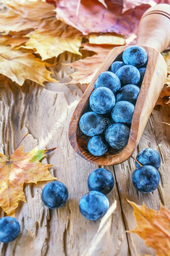 De blauwe bessen van de de herfstoogst van de sleedoorn in een houten lepel uit de olijfboom De achtergrond van de herfst Rode en stock foto