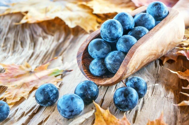 De blauwe bessen van de de herfstoogst van de sleedoorn in een houten lepel uit de olijfboom De achtergrond van de herfst Rode en stock fotografie