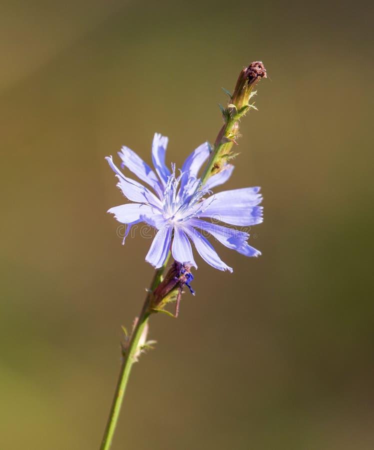 De blauwe bloem groeit in aard stock afbeeldingen