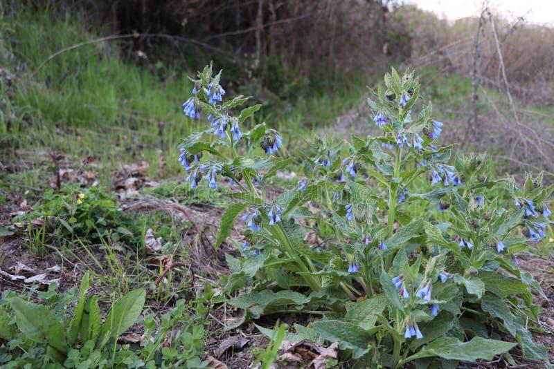 De blauwe bloemen bloeiden in het reeds warme bos royalty-vrije stock foto