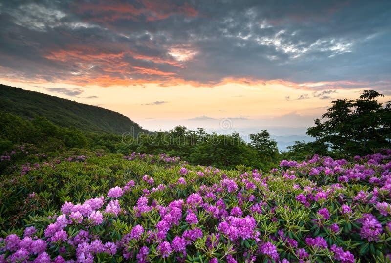 De blauwe Bloemen van de Lente van de Zonsondergang van de Bergen van het Brede rijweg met mooi aangelegd landschap van de Rand stock fotografie